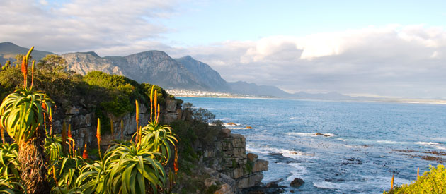 Picture of Hermanus